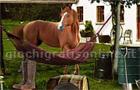 Giochi online: Horse Farm