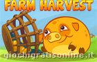 Mango Piggy Piggy Farm Harvest